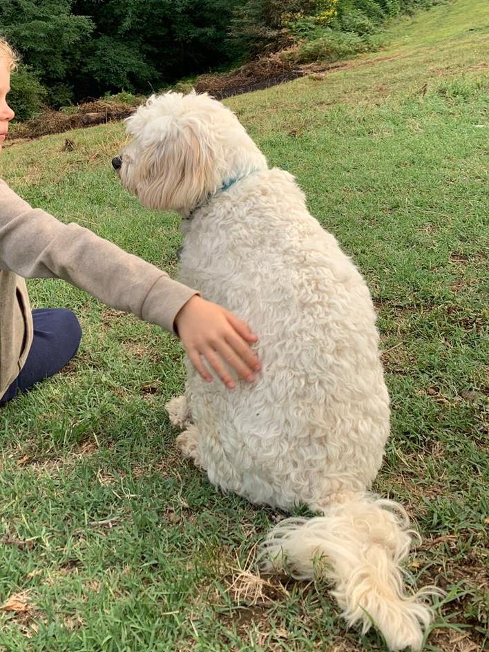 prévention des risque d'accident par morsure de chien